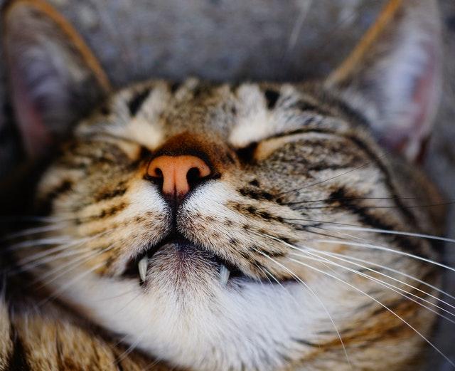 Gato durmiendo relajadamente